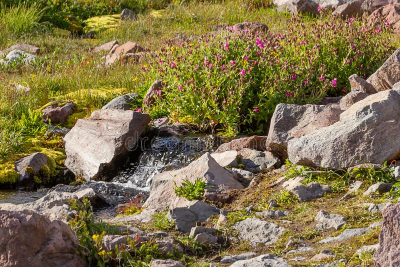 kamienie i skały wzdłuż wysokogórskiej łąki i strumienia zdjęcia royalty free