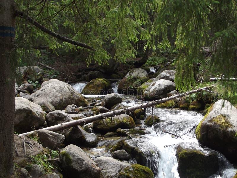 Kamienie w halnej rzece fotografia royalty free