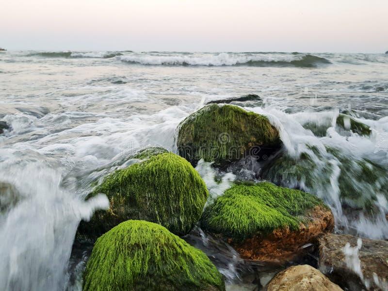 Kamienie z jaskrawym - zielony mech w wodzie morskiej zdjęcie royalty free