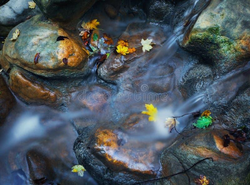 Kamienie z zielonymi mech andl jesieni liśćmi w halnej rzece obrazy royalty free