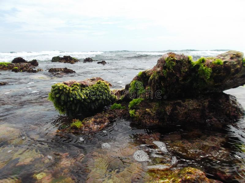 Kamienie Zakrywający Z gałęzatką Na wybrzeżu żółw wyspa W Wenezuela obraz stock