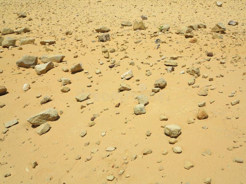 Kamienisty pustynny tło fotografia royalty free