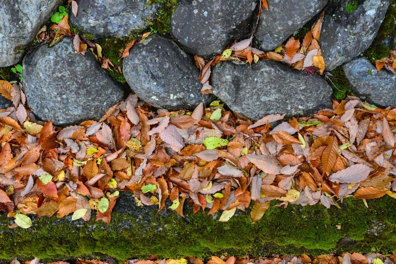 Kamienna ściana z jesień liśćmi zdjęcie royalty free