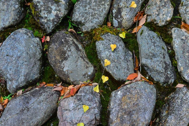 Kamienna ściana z jesień liśćmi zdjęcie stock