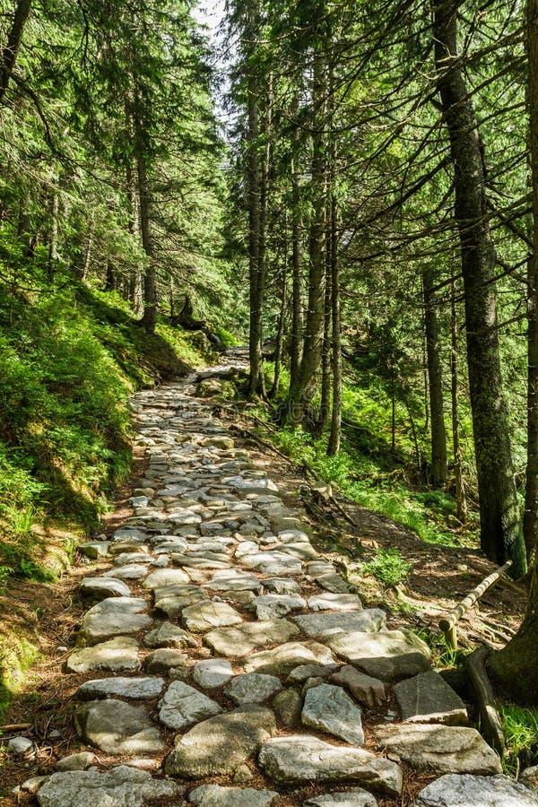Kamienna ścieżka między drzewami w górach zdjęcia royalty free