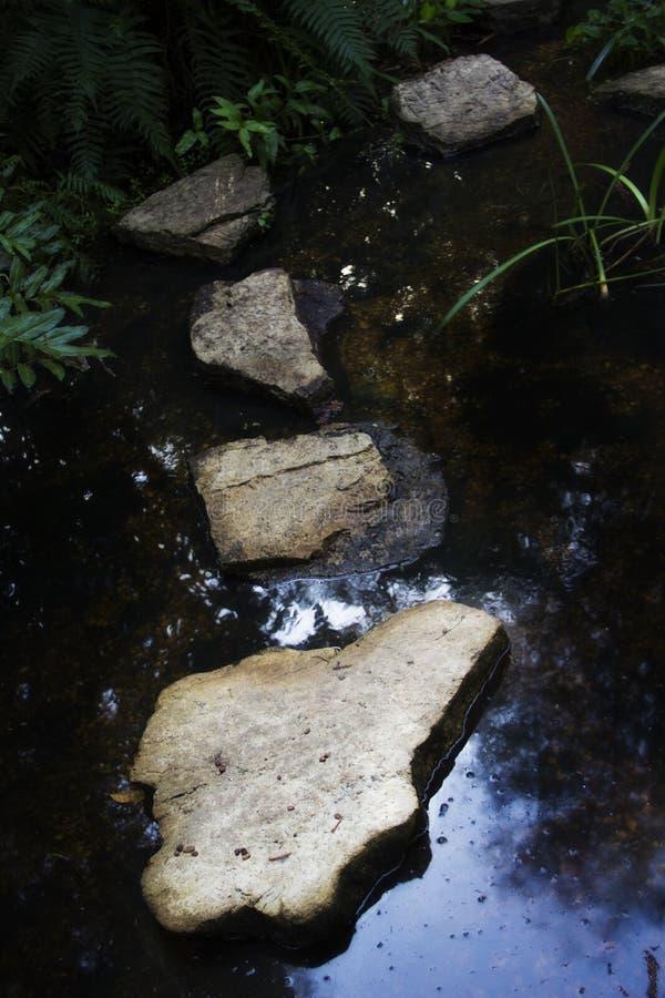 Kamienna ścieżka nad strumieniem w Naples ogródzie botanicznym w Naples Floryda fotografia royalty free