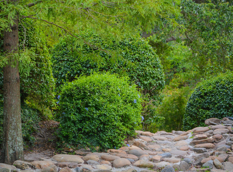 Kamienna ścieżka przez ogródu Largo central park w Largo, Floryda, usa zdjęcia royalty free