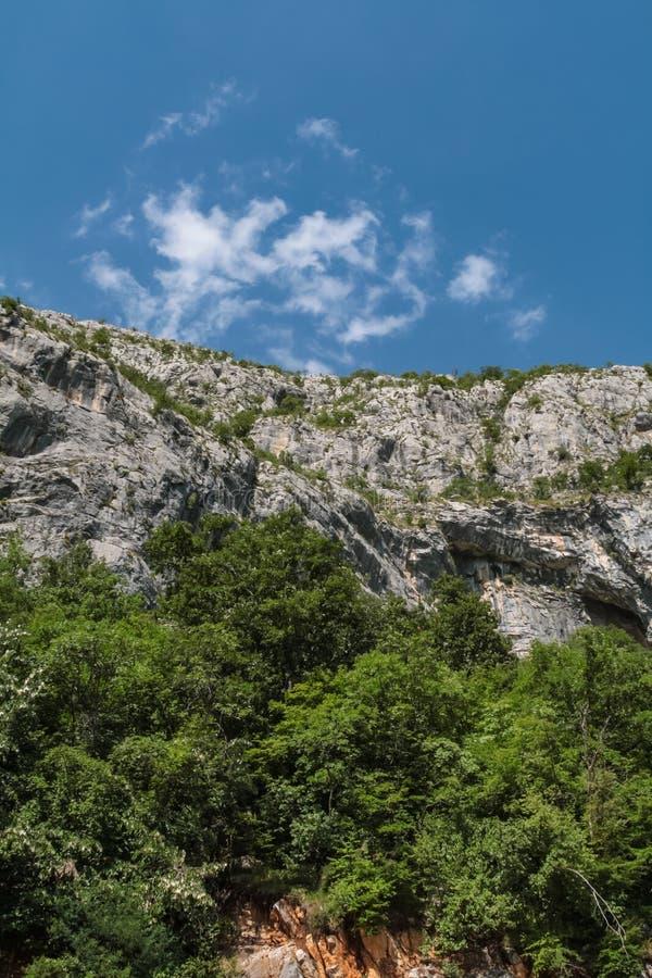 Kamienna skała z lasowym dorośnięciem przy stopą zdjęcia royalty free