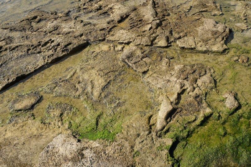 Kamienna tekstura pod wodą zdjęcie stock