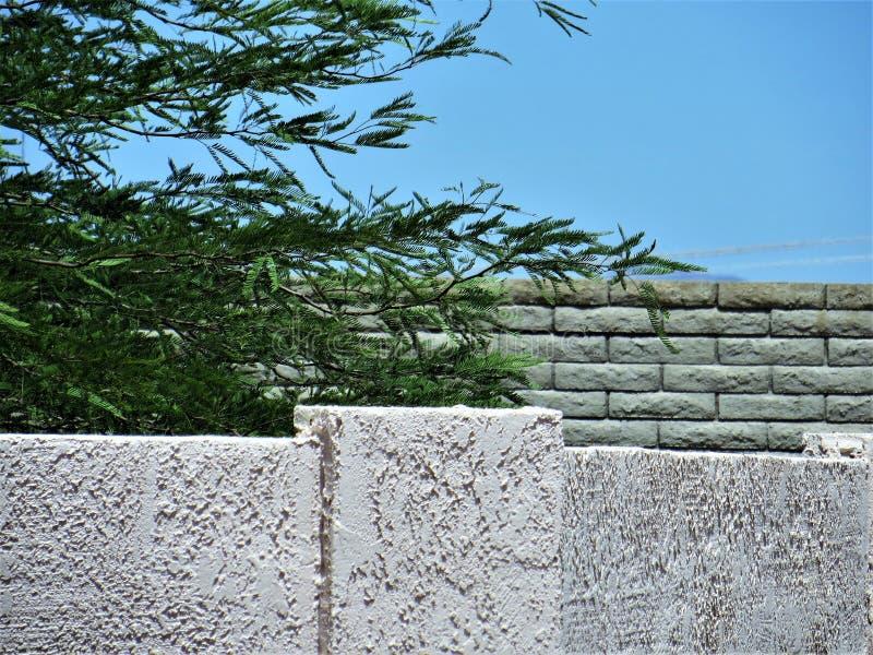 Kamienne ściany i palo verde drzewo fotografia royalty free