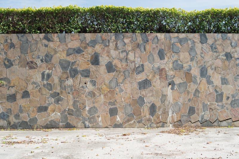 Kamiennej ściany i drzewa ogród zdjęcia royalty free
