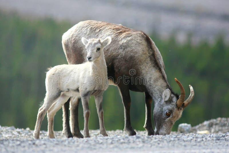 kamienni cakli terytorium Yukon zdjęcia stock