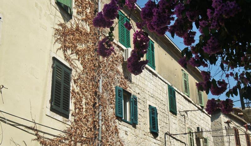 Kamienny dom z zielonymi okno w ulicie stary miasteczko, piękna architektura, słoneczny dzień, rozłam, Chorwacja zdjęcia royalty free