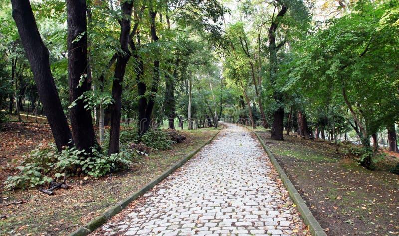 Kamienny droga przemian przy miasto parkiem obrazy royalty free