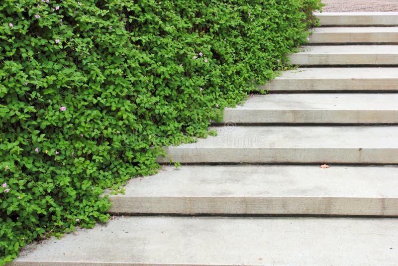 Kamienny schody z rośliną w ogródzie zdjęcie stock