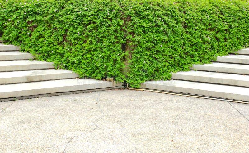 Kamienny schody z rośliną w ogródzie zdjęcie royalty free