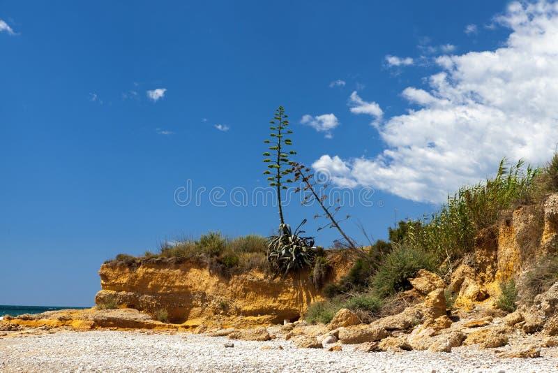 Kamienny stos na dennej plaży Kamienny basztowy zbliżenie zdjęcia royalty free