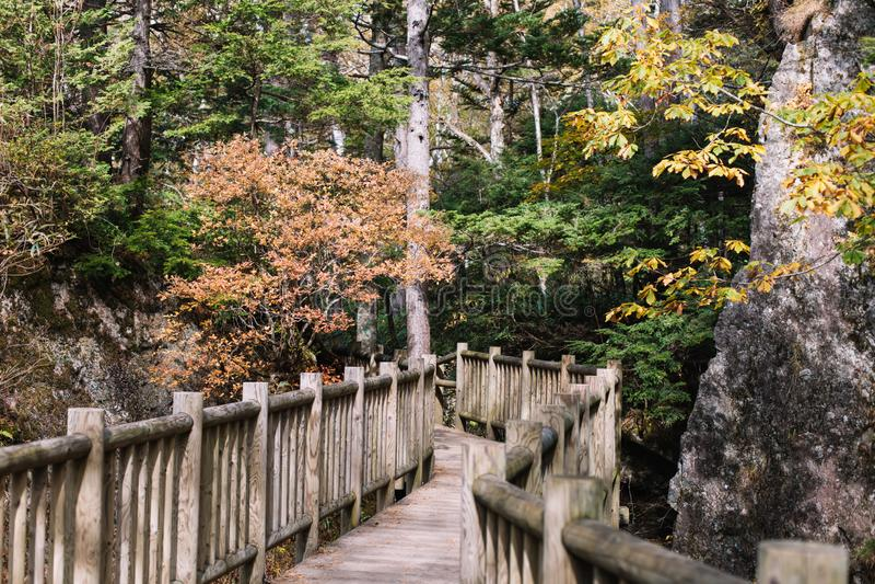 Kamikochi与树的自然痕迹在forrest在木walkpath的秋天季节期间 库存照片