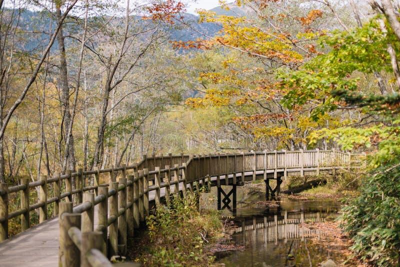 Kamikochi natury ślada z drzewem w forrest podczas jesień sezonu Drewnianym walkpath zdjęcie stock