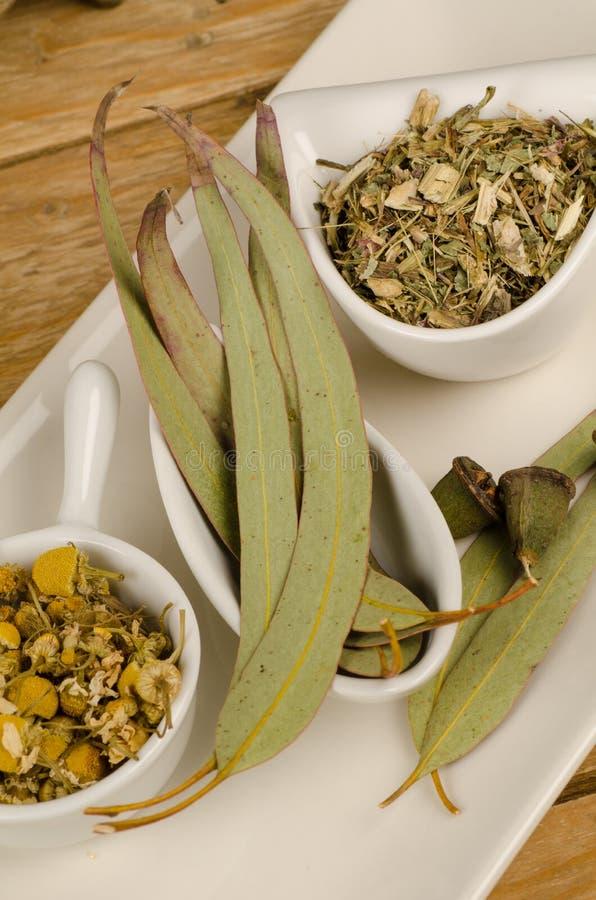Kamille, Echinacea, Eukalyptus lizenzfreie stockfotos