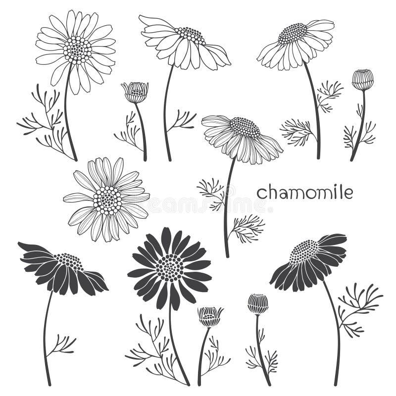 Kamille, Elemente für Design auf einem weißen Hintergrund V stock abbildung