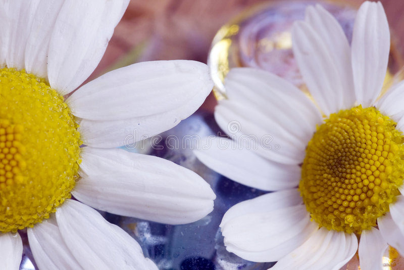 Kamille en kiezelsteen van glas royalty-vrije stock foto's
