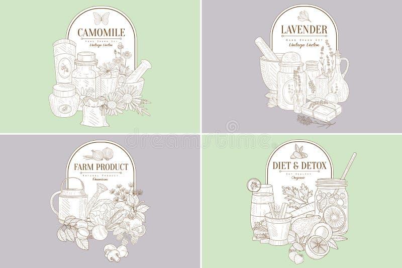 Kamille, Lavendel, Landbouwproduct, Uitstekende Hand Getrokken de Etiketten Vectorillustratie van Dieetdetox vector illustratie