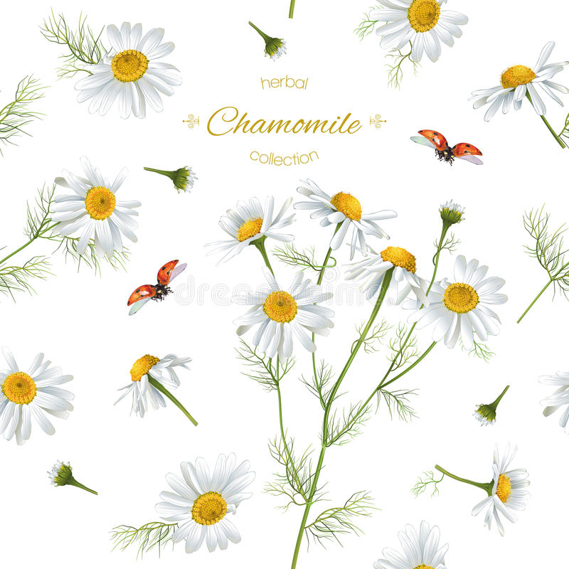 Kamille naadloos patroon royalty-vrije illustratie