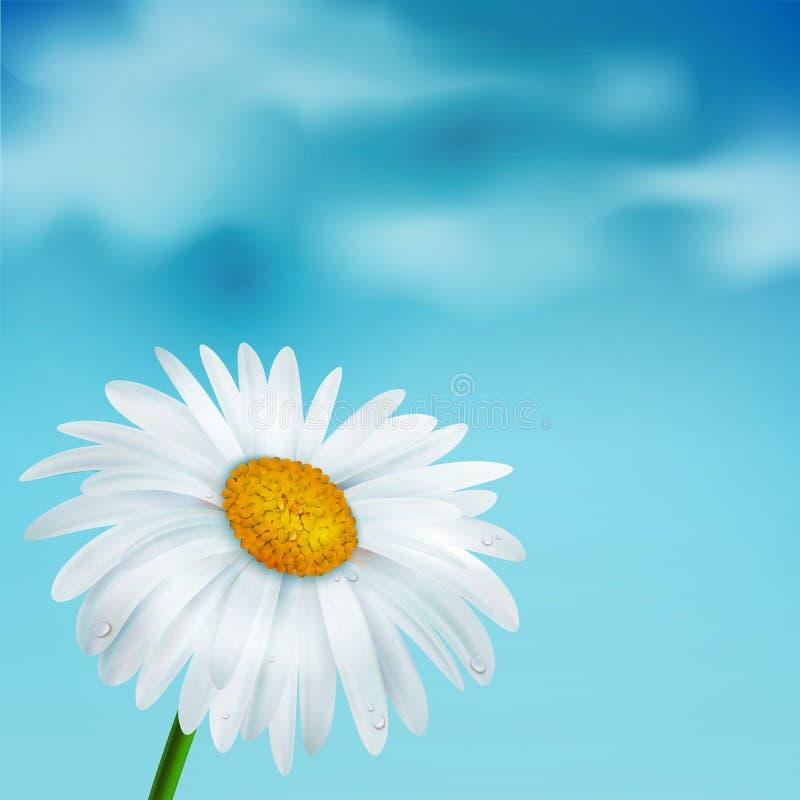 Kamille op een blauwe hemelachtergrond vector illustratie