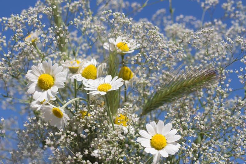 Kamille wildes Wiesengras weißen Gypsophila und Blumenblumenstraußnahaufnahme gegen den Himmel lizenzfreie stockfotografie