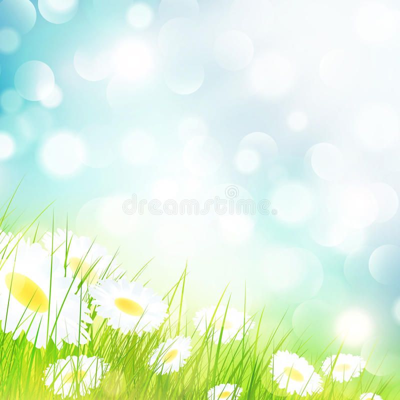 Kamillen-Blumen-Feld stock abbildung