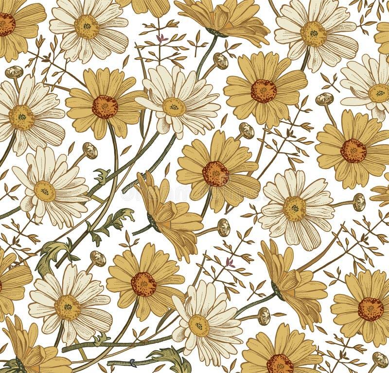 Kamillen-Gras Wildflowersvektor Zeichnung, Stich Blühende weiße gelbe realistische Blumen des schönen Weinlesehintergrundes stock abbildung