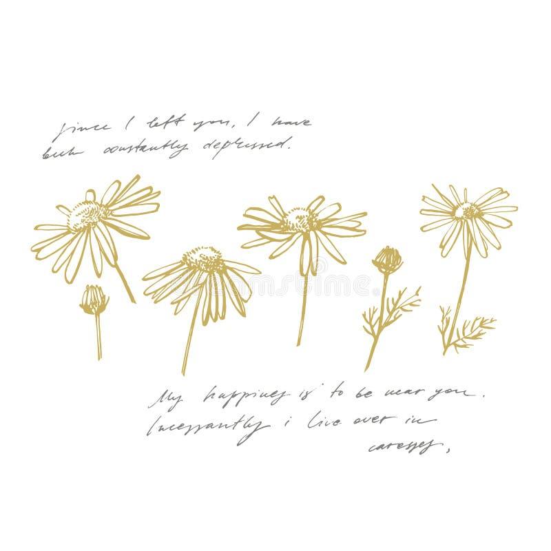 Kamillen- oder G?nsebl?mchenblume Botanische Illustration Gut für Kosmetik, Medizin, behandelnd, Aromatherapie, Krankenpflege stock abbildung