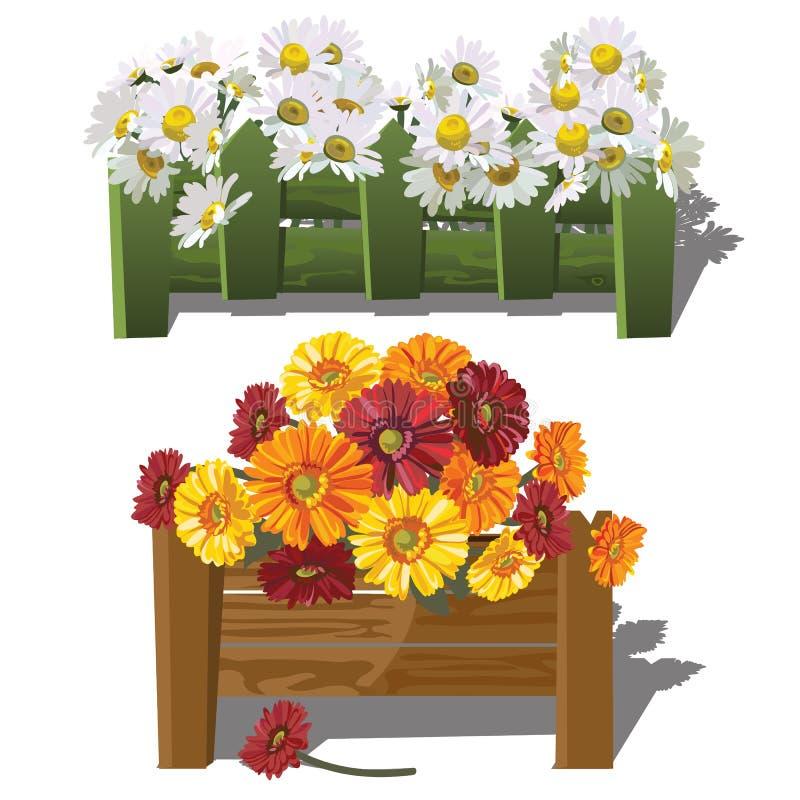 Kamillen- und Gerberagänseblümchen hinter Zaun stock abbildung