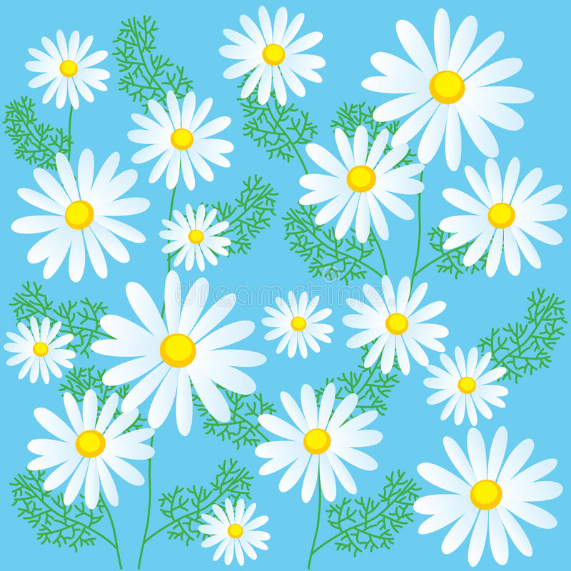 Kamillenblumen auf einem blauen Hintergrund Nahtlose Vektor-Illustrationen Kamillen-Blumen für Verkauf stock abbildung