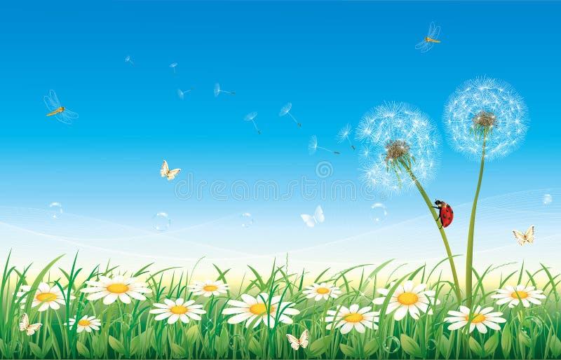 Download Kamilleweide vector illustratie. Illustratie bestaande uit paardebloemen - 39108472