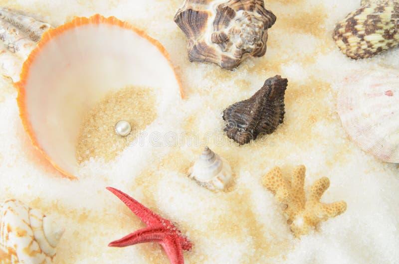 Kamm-Muscheln und Perle stockbilder
