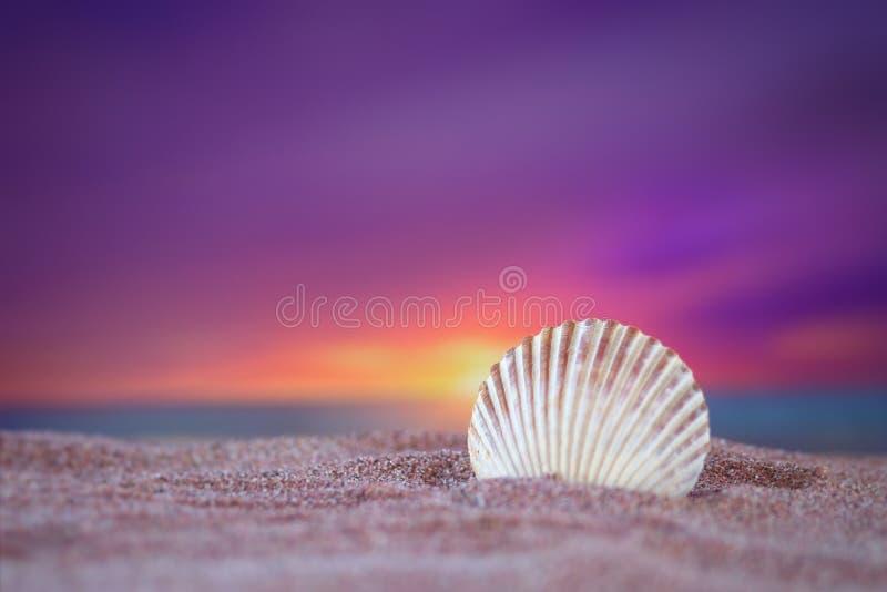 Kammosselshell in het oceaanzand onder een mooie zonsondergang stock foto's
