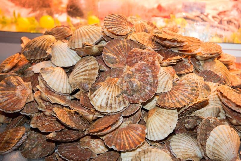 Kammosselshell voor verkoop bij verse zeevruchtenmarkt royalty-vrije stock fotografie
