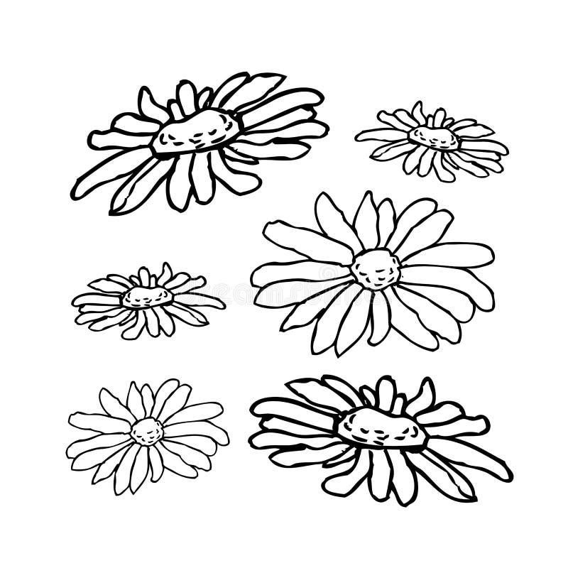 Kamomill dragen blom- hand för kamomillblomma inrista vektorillustrationen vektor illustrationer