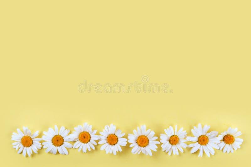Kamomillar på gul bakgrund arkivbilder