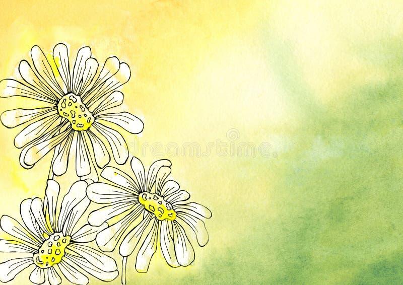 Kamomillblommor i grafisk stil Design av en bakgrund, affisch, kort, hälsningar, bröllop, inbjudningar som annonserar, baner vektor illustrationer