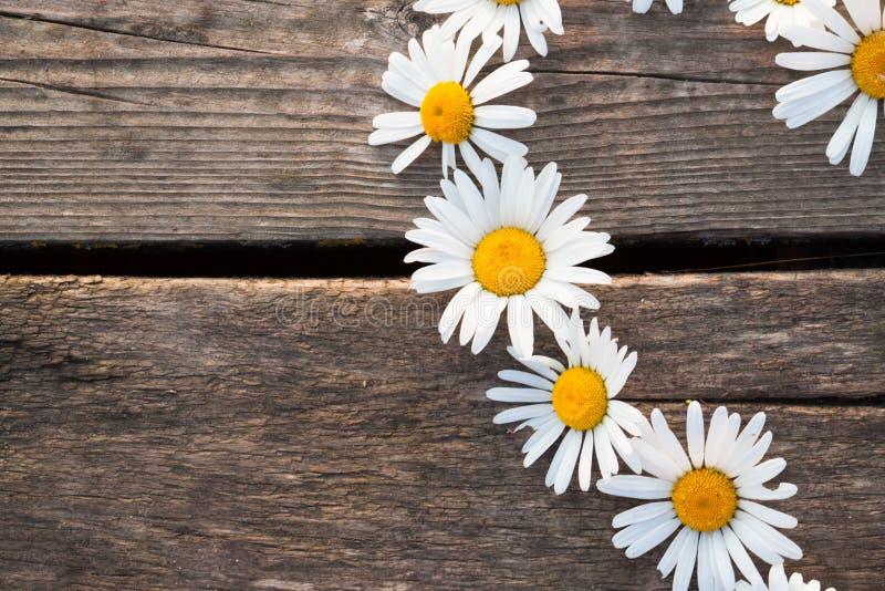 Kamomillen blommar på det wood skrivbordet royaltyfri foto