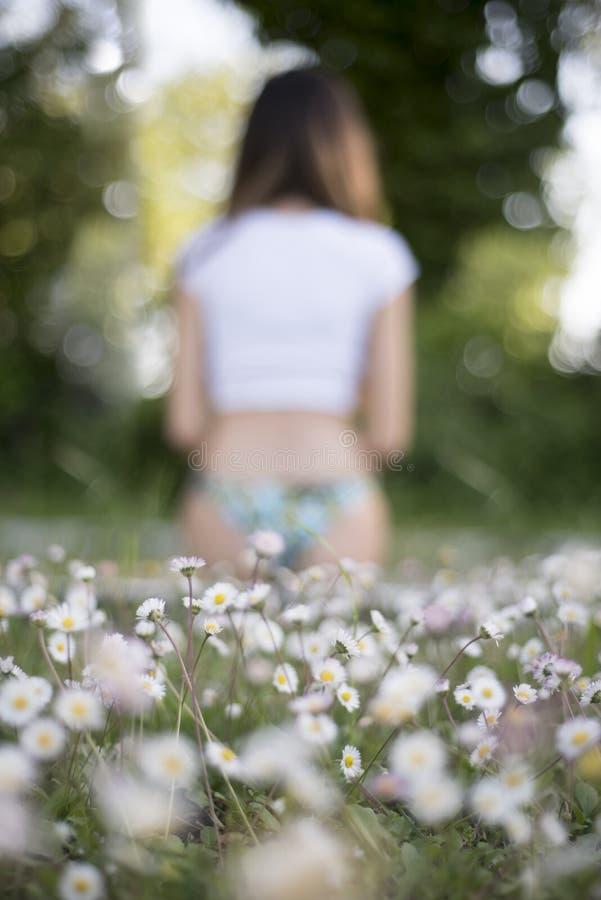 Kamomillfält på förgrund arkivfoto