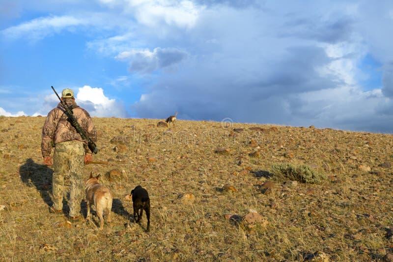 Kamouflerad amerikansk jägare- och spårninghundkapplöpning royaltyfri foto