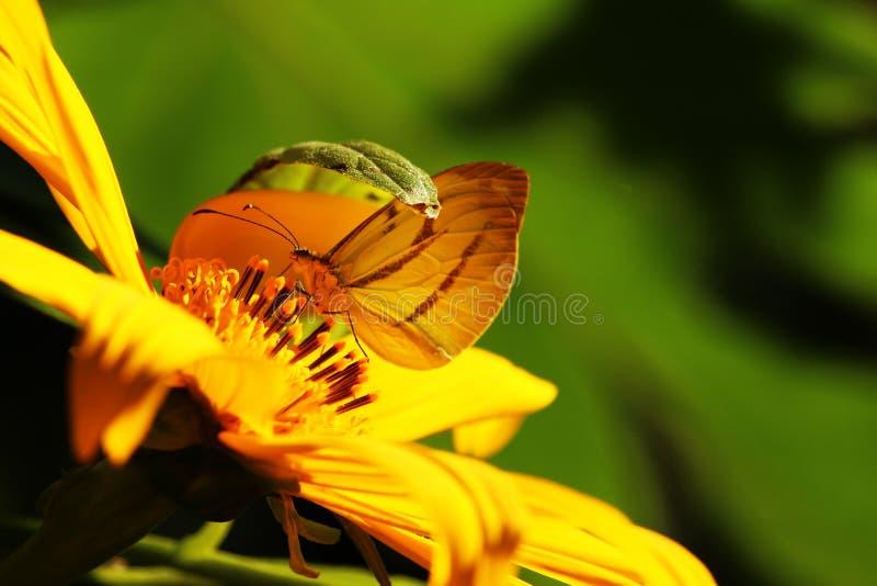 Kamouflerad fjäril arkivfoto