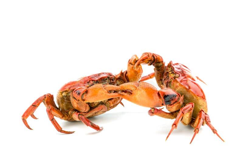Kampf der Krabbe lizenzfreie stockbilder