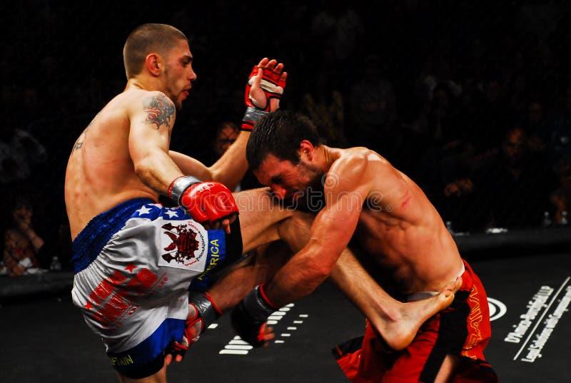 Kampf Tom-Evans V. Dominic Warr MMA lizenzfreies stockbild
