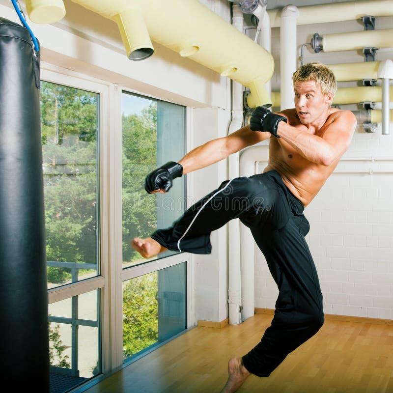 Kampfkunst-Fliegen stockfotografie