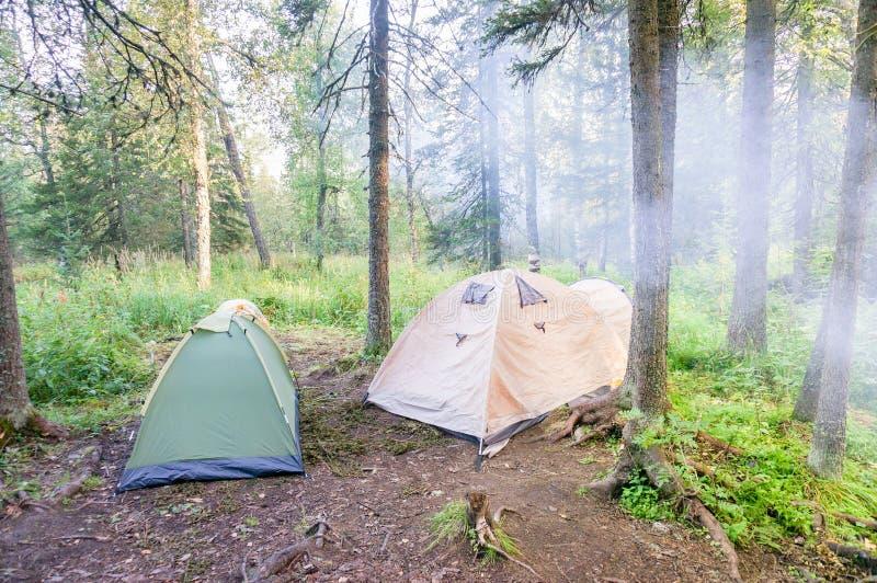 Kampieren und Zelt unter dem Kiefernwald im Sonnenaufgang lizenzfreie stockfotografie